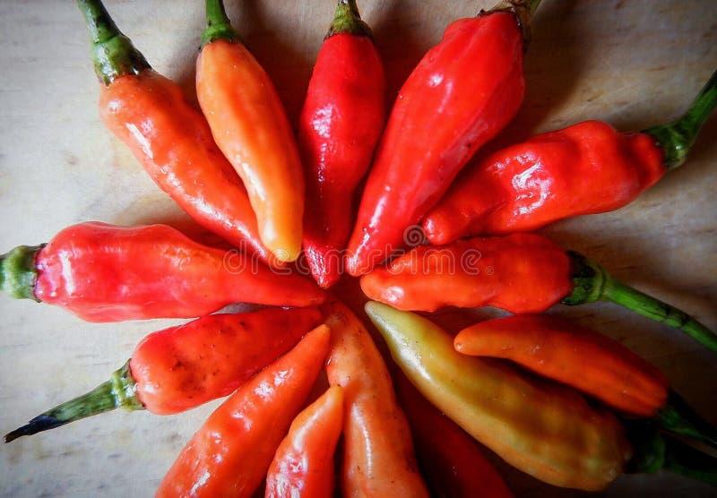 Röd liten chili royaltyfria foton