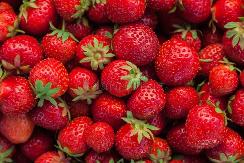 Röd mogen jordgubbe med gröna svanslögner royaltyfri fotografi