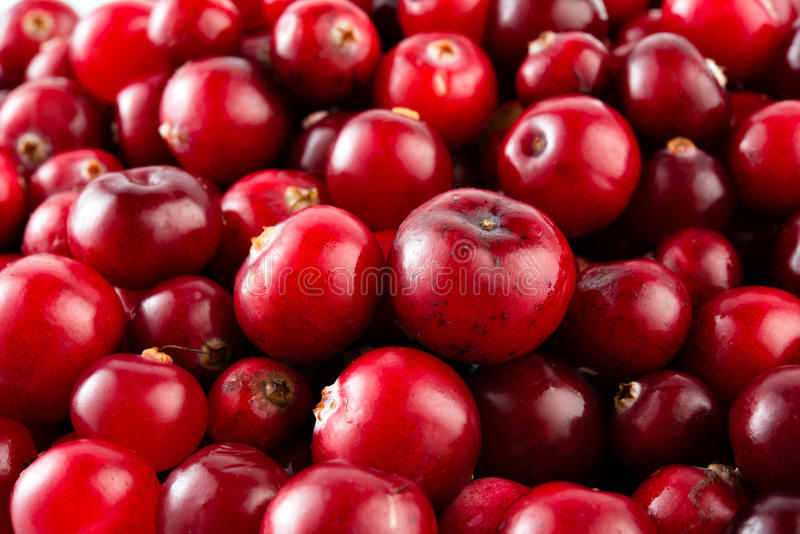 Download Röd mogen tranbärmakro. fotografering för bildbyråer. Bild av cranberry - 37344103