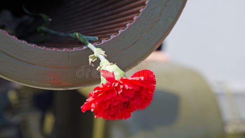 Röd nejlika i tysta ned av vapentrumman fotografering för bildbyråer