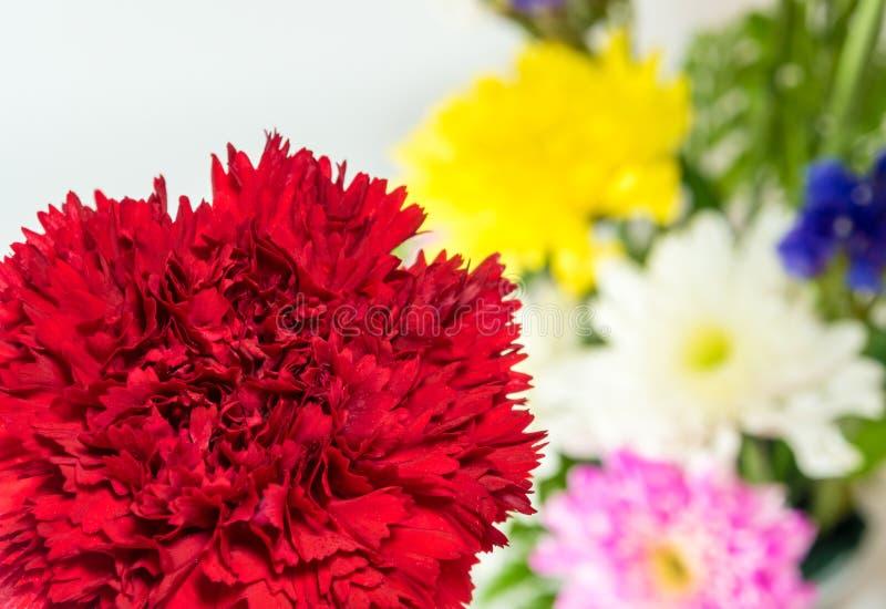 Röd nejlika- och krysantemumbakgrund arkivfoto