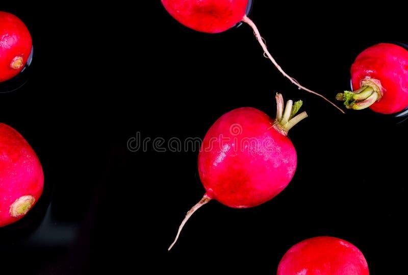 Röd ny rädisa på trä royaltyfria foton