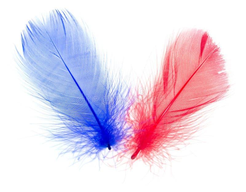 Röd och blå fjäder på en vit bakgrund royaltyfri bild