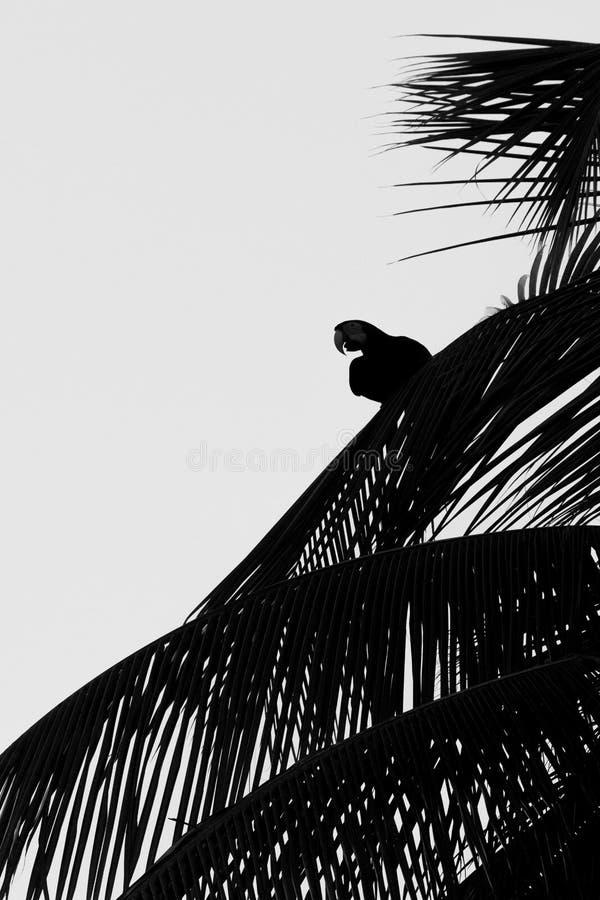 Röd-och-gräsplan ara som sitter på palmträdbladet, Trinidad ö Djurlivplats från den Caribean naturen, exotiskt affärsföretag royaltyfri foto