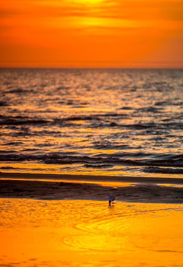 röd orange solnedgång vid havet och fågeln royaltyfri bild