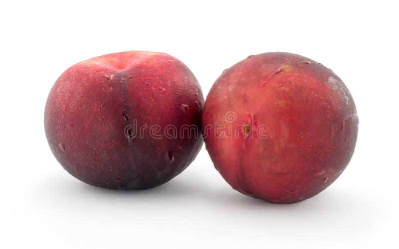 Röd persika royaltyfri foto