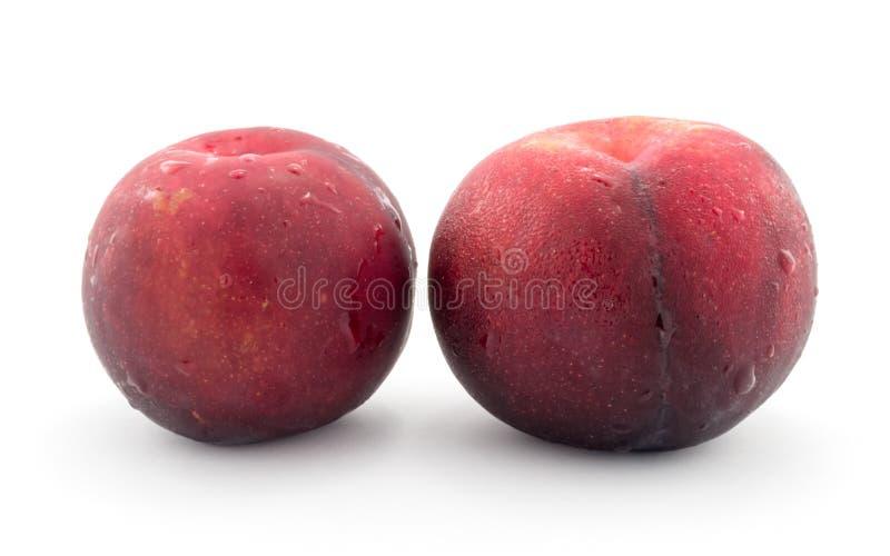 Röd persika arkivbild