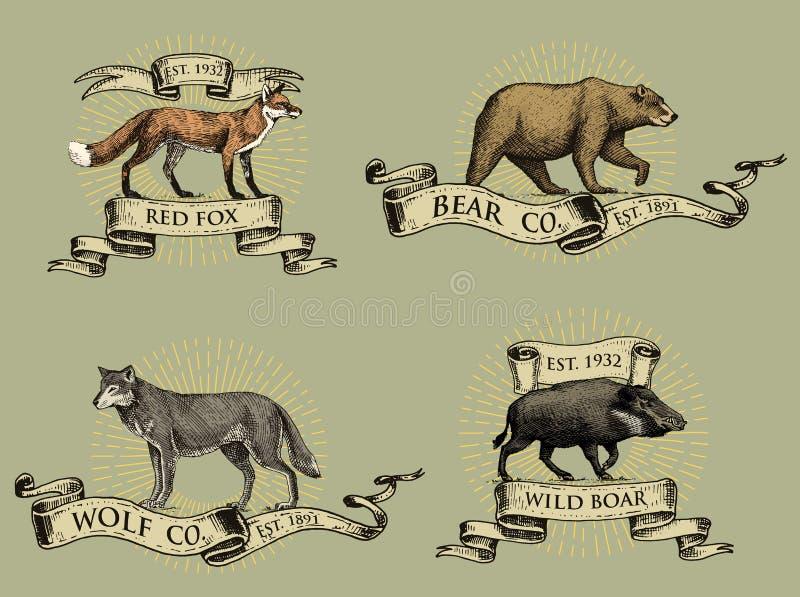 Röd räv, logoer för galtbjörn och för grå varg, emblem eller emblem med vilda djur och baner eller band i tappning, retro gammalt vektor illustrationer