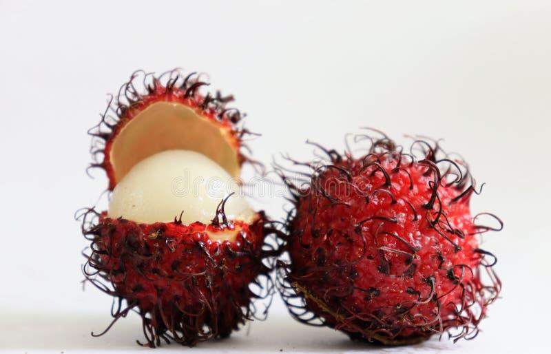 Röd ramptonfrukt med en öppen frukt som vänder mot in mot oss fotografering för bildbyråer