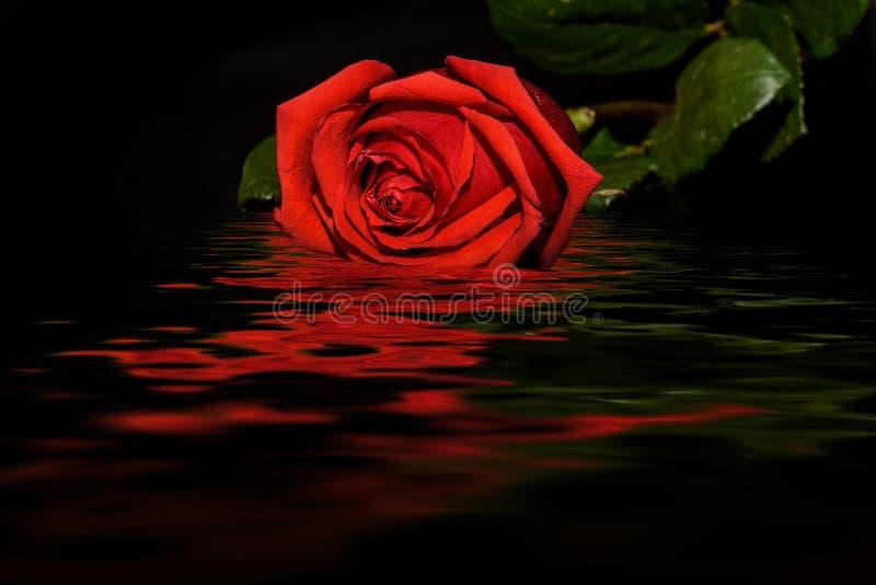 Röd reflexion för vatten för rossvartbakgrund royaltyfri fotografi