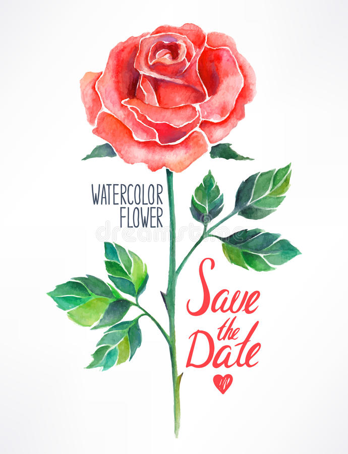 Röd ros för vattenfärg royaltyfri illustrationer