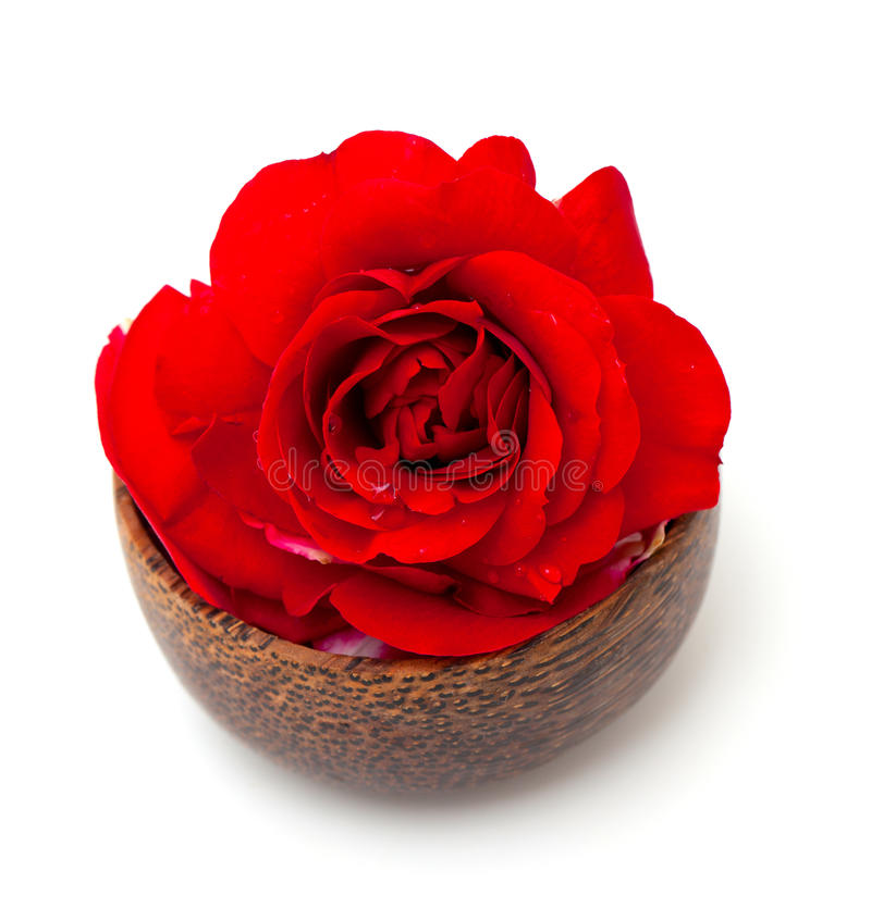 Röd ros i en träbunke royaltyfri bild