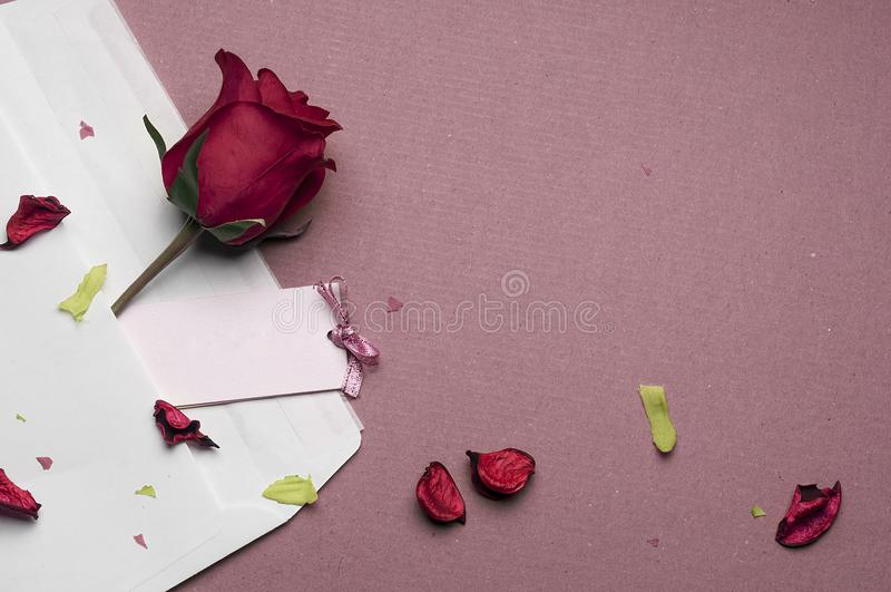 Röd ros i ett kuvert på en rosa bakgrund royaltyfria foton