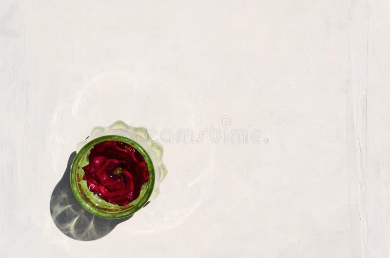 Röd ros i vasen för grönt exponeringsglas på den vita bakgrunden, bästa sikt T?m utrymme f?r din text arkivfoto