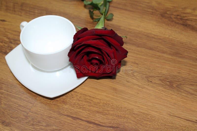 Röd ros med en kopp fotografering för bildbyråer
