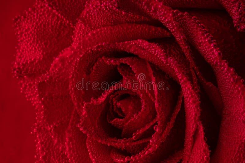 Röd ros med luftbubblor på kronbladen Ros i akvariet arkivbild