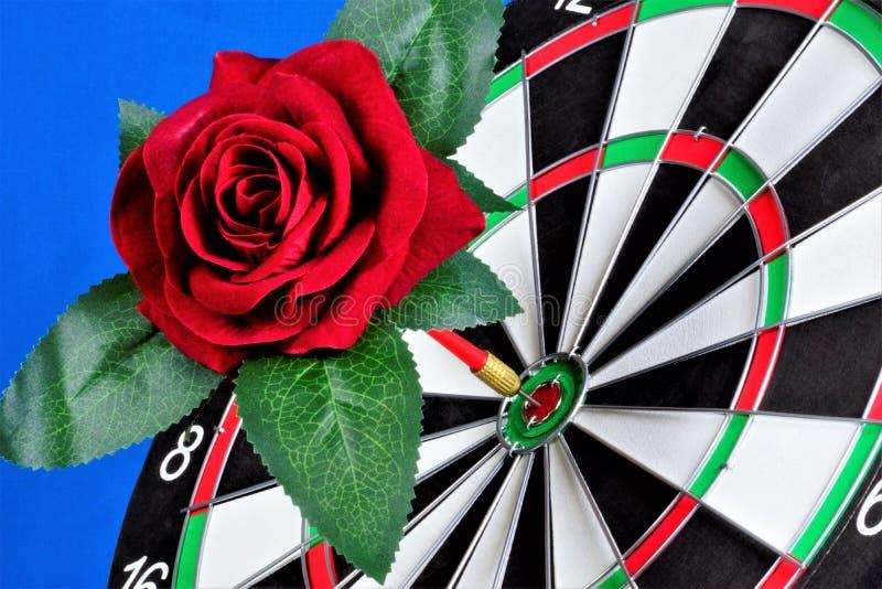 Röd ros och ett mål för sporten av pilar Rosa blommadrottning - ett symbol av förälskelse och passion, garnering av ceremonierna  arkivfoton