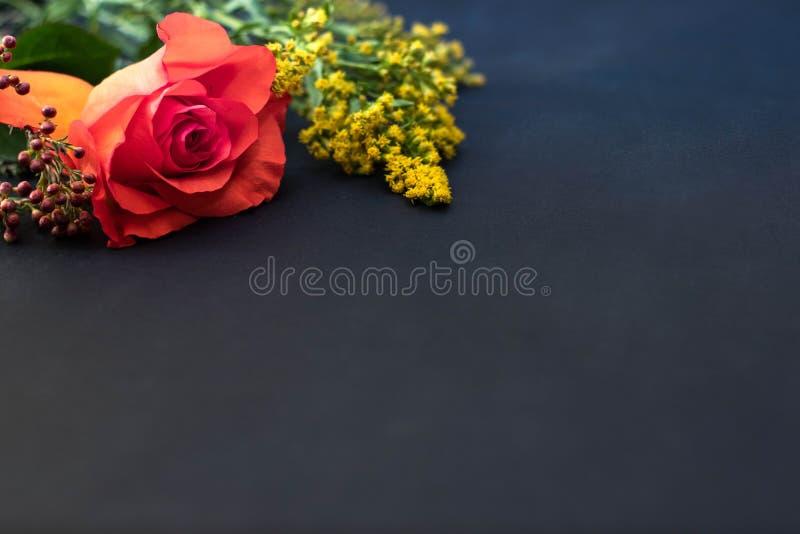 Röd ros och gul filial på svart bacground arkivbild