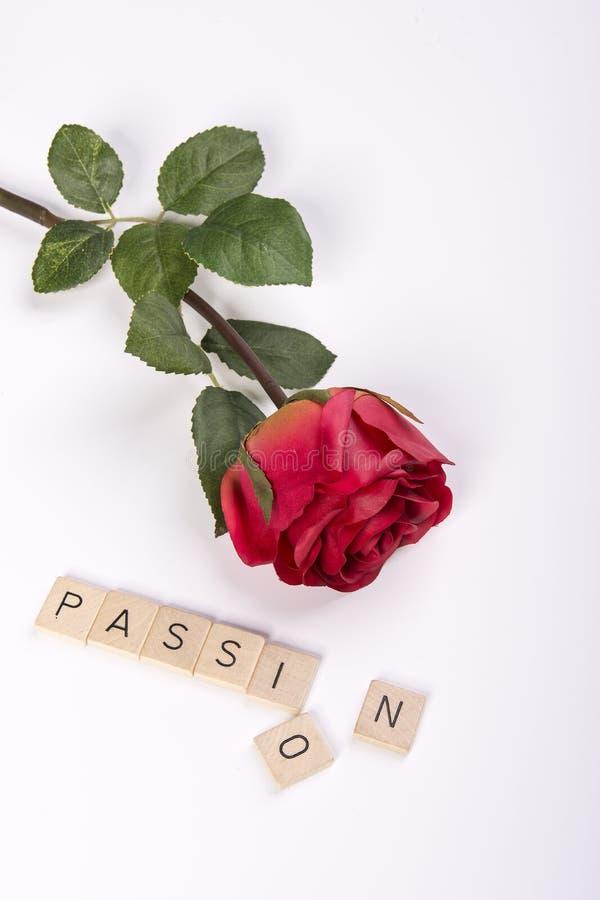 Röd ros och passion royaltyfria bilder