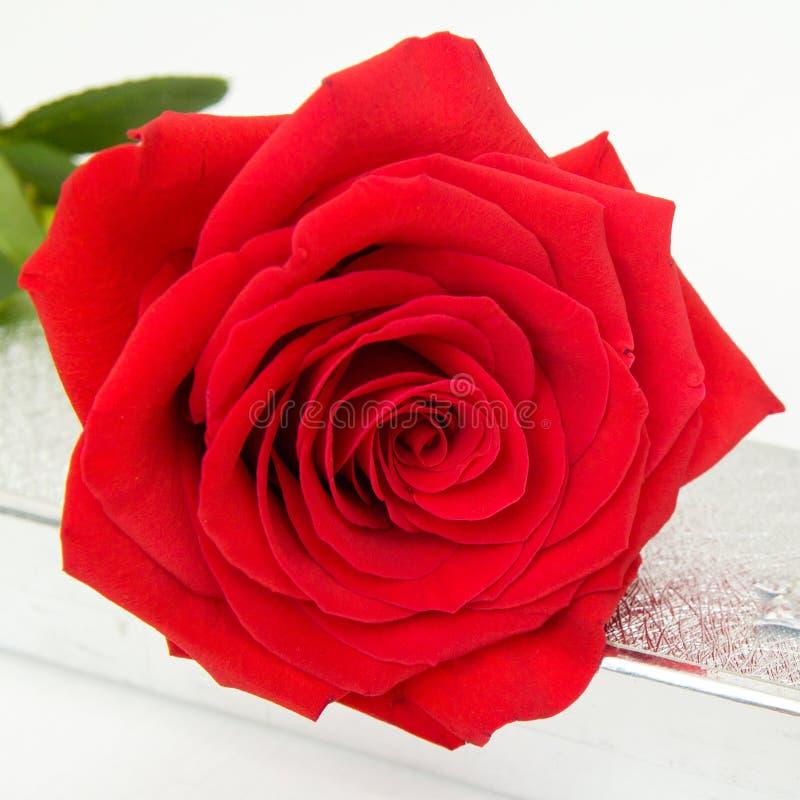 Röd ros- och smyckengåvaask med bokebakgrund - Valentin och 8 moder Women' för mars; s-dagbegrepp arkivfoto