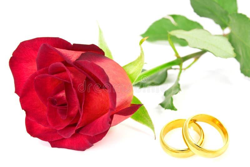 Röd ros och vigselringar royaltyfri bild
