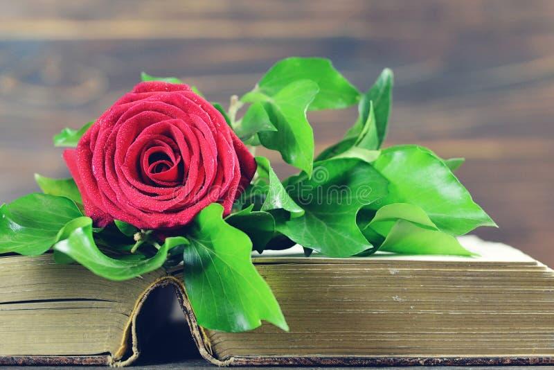 Röd ros på den öppnade boken royaltyfri bild