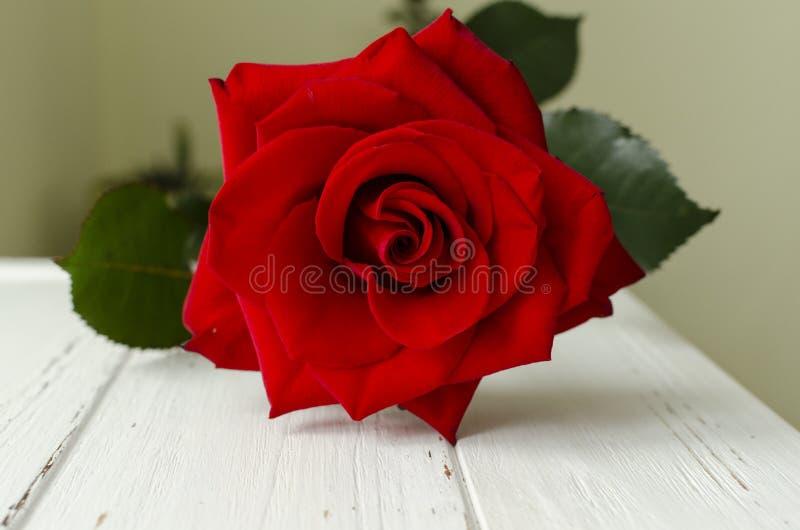 Röd ros på den gamla vita trätabellen royaltyfri foto