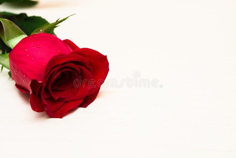 Röd ros på en ljus träbakgrund Kvinnors dag, valentin arkivfoton
