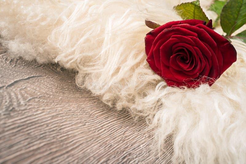 Röd ros på kläder arkivbild