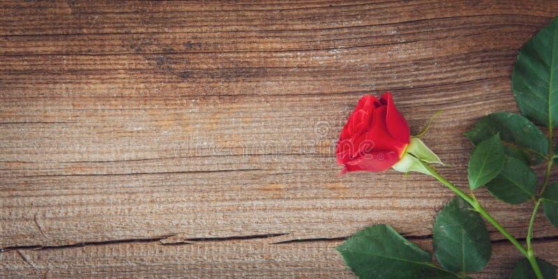 Röd ros på träbakgrund royaltyfri bild
