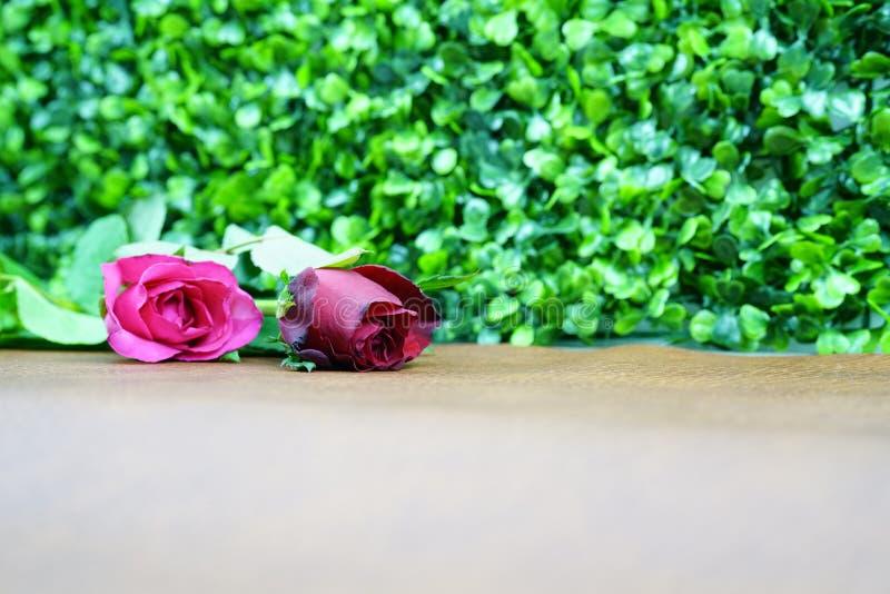 Röd ros två på bakgrund för bruntlädertabell och för grön växt Selektivt fokusera royaltyfria foton