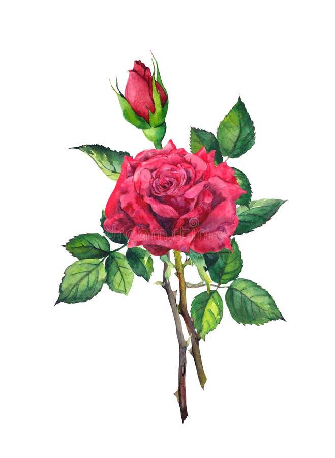 Röd rosblomma - stam med sidor vattenfärg vektor illustrationer