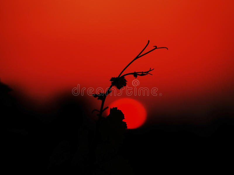 röd solnedgång royaltyfri bild