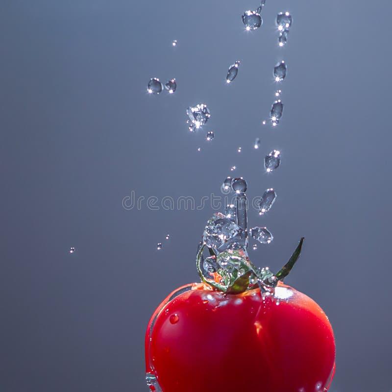 Röd tomat i vattendroppar royaltyfria bilder