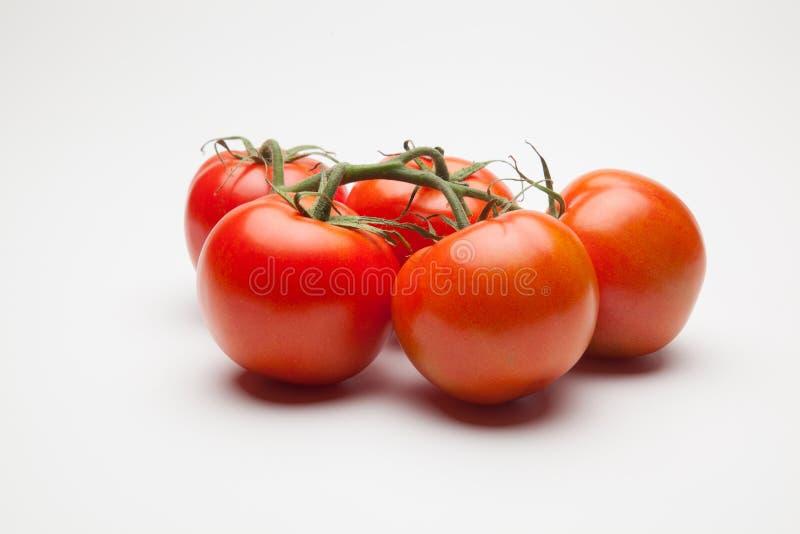Röd tomat, med droppar av vatten som betecknar friskhet och hälsa arkivfoto