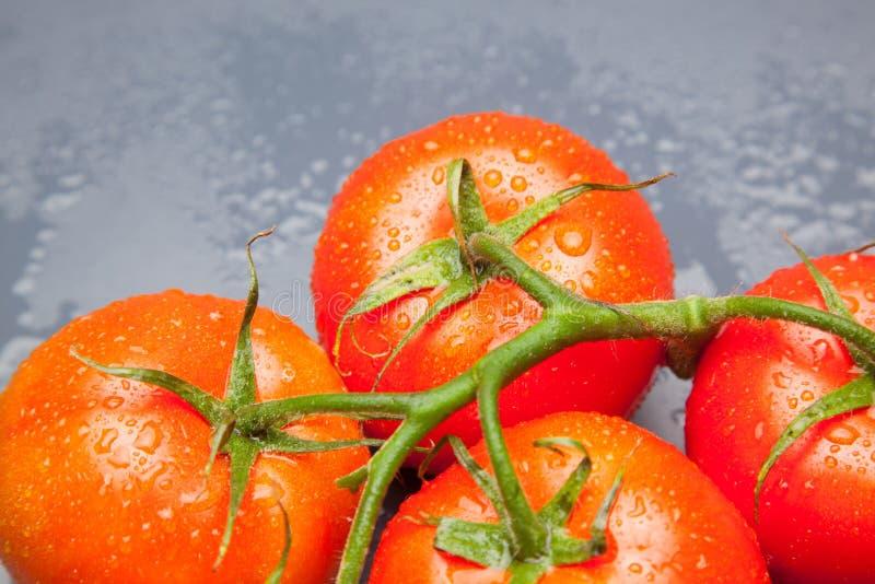 Röd tomat, med droppar av vatten som betecknar friskhet och hälsa royaltyfri fotografi