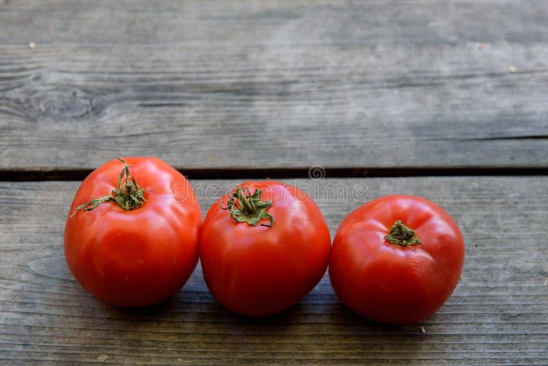 Röd tomat tre i rad royaltyfri bild