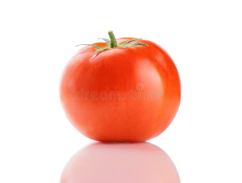 röd tomatbråckband royaltyfri bild