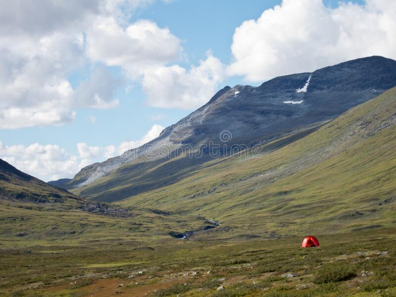 Röd toning i vildmarken royaltyfri bild