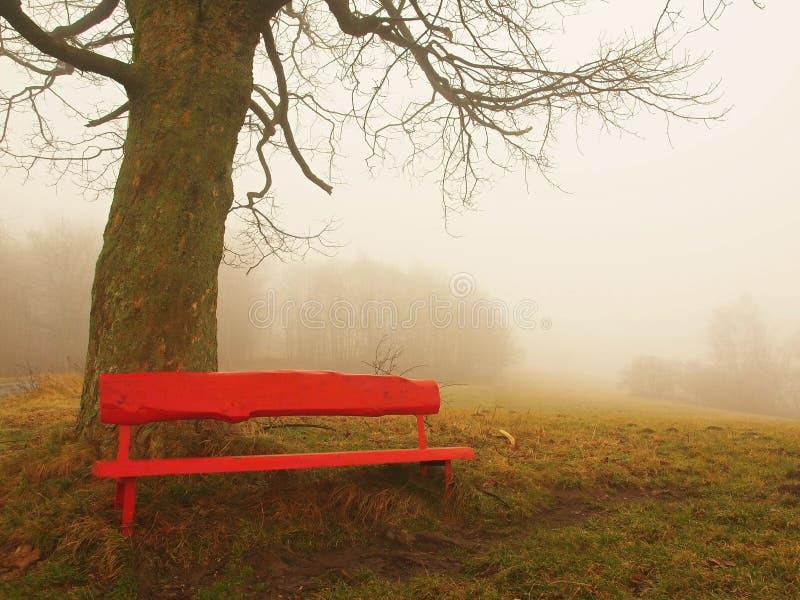 Röd träbänk nedanför den gamla linden. Kallt dimmigt höstväder. fotografering för bildbyråer