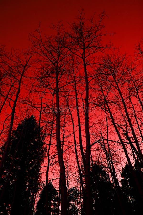 röd tree royaltyfri fotografi