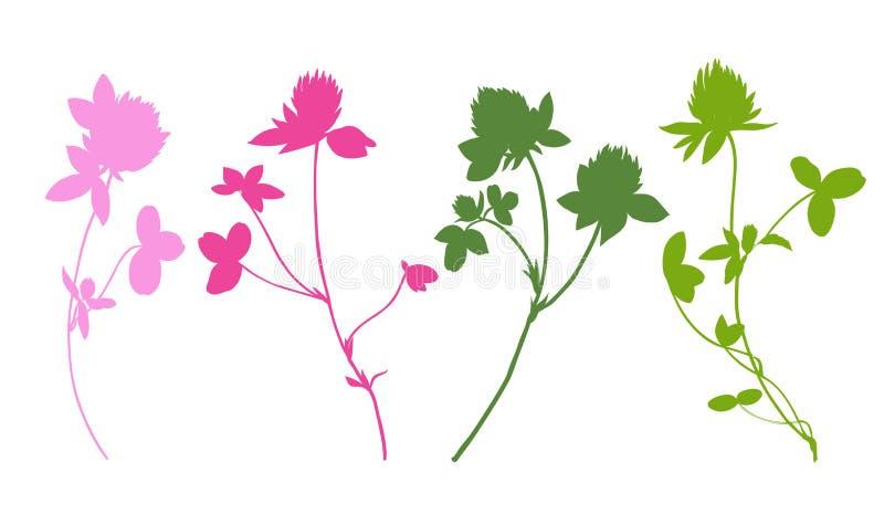 Röd växt av släktet Trifolium, för fältblomma för treklöver som lös kontur isoleras på vit bakgrund, för vektorillustration för h royaltyfri illustrationer