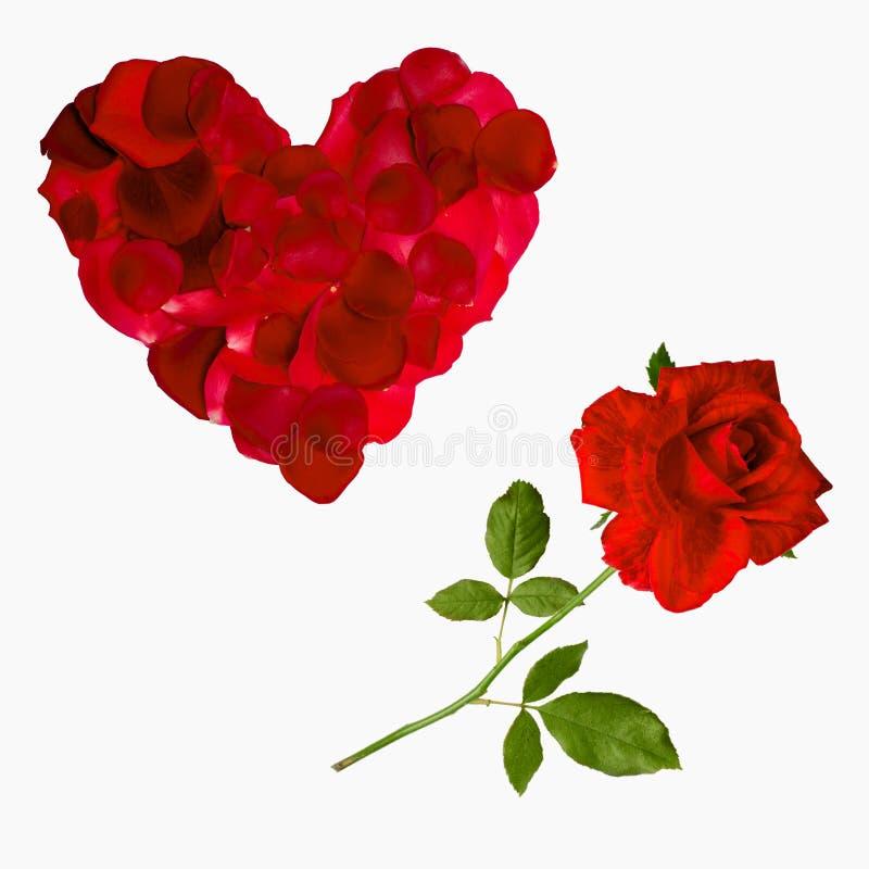 Röd valentin för roskronbladhjärta royaltyfri foto