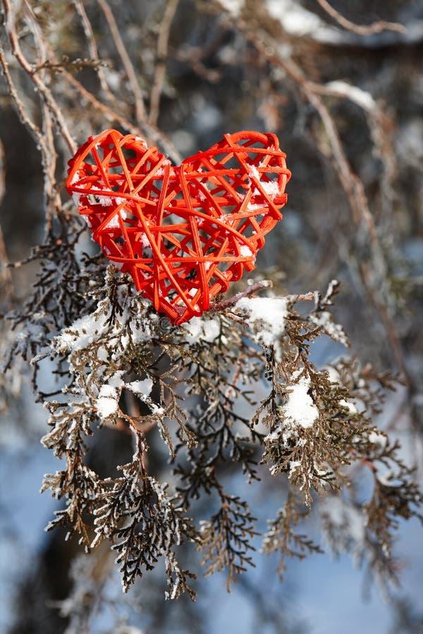 Röd valentinhjärta på ett snöig träd royaltyfri fotografi