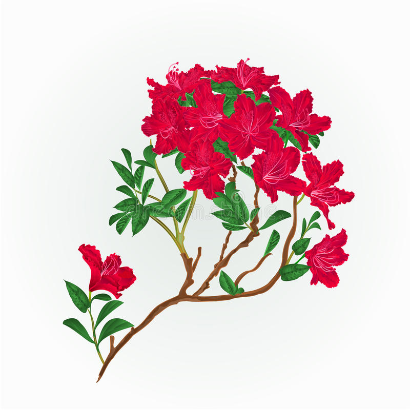 Röd vektor för rhododendronfilialtappning royaltyfri illustrationer