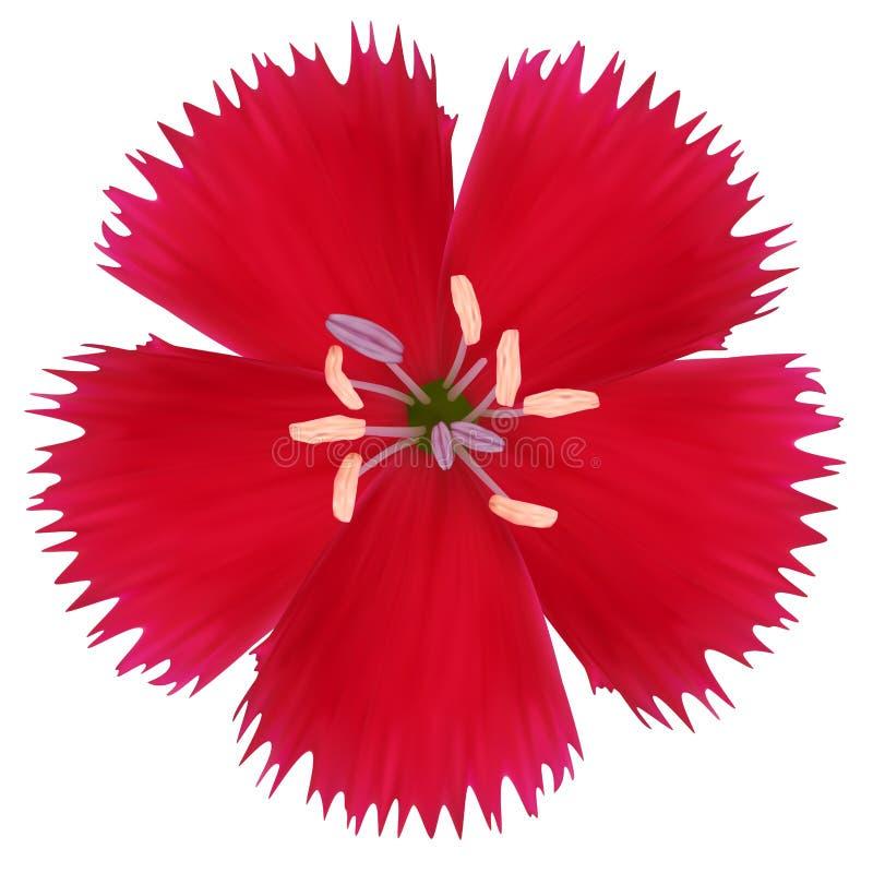 Röd vildblomma royaltyfri illustrationer