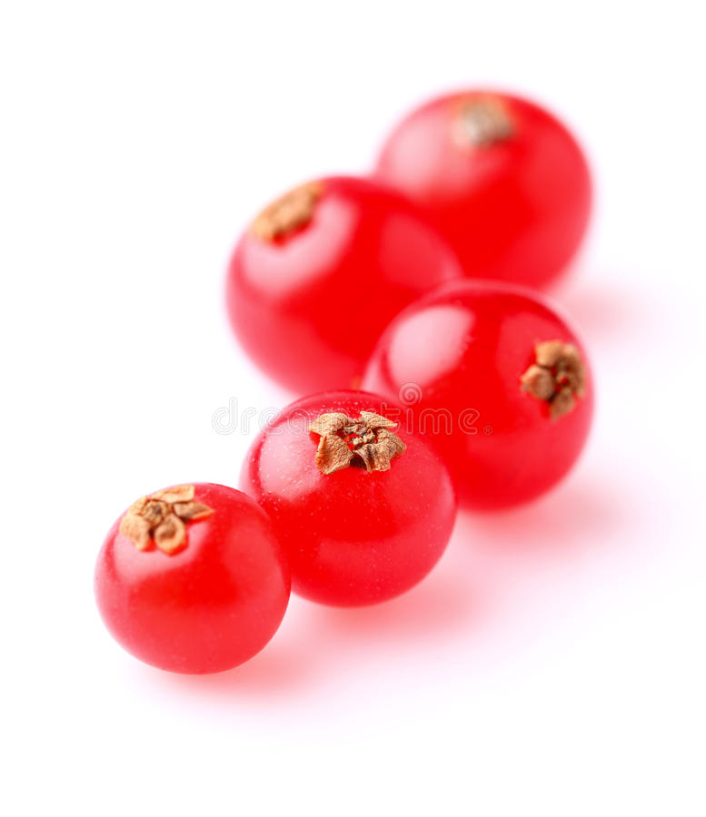 Röd vinbär i closeup royaltyfri bild