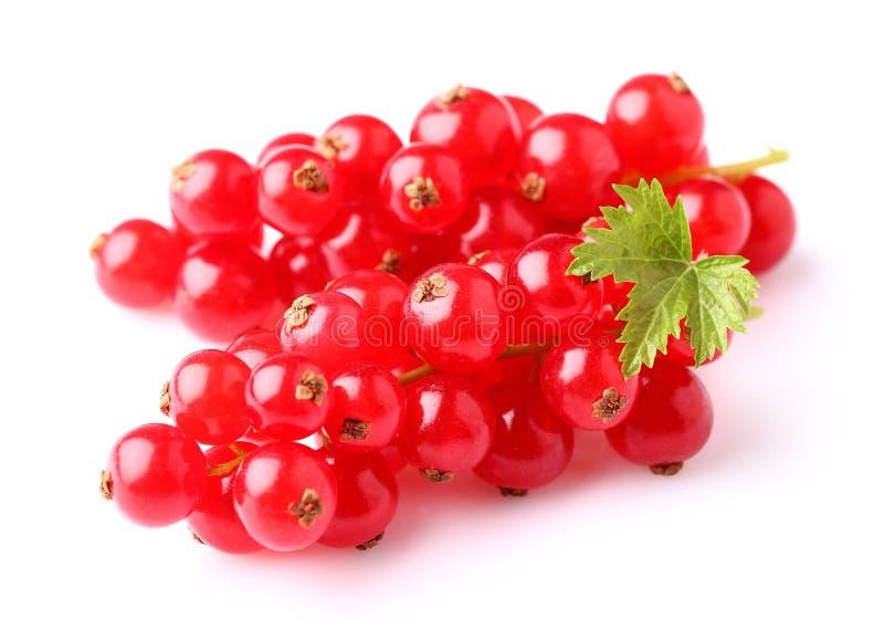 Röd vinbär i closeup royaltyfri fotografi