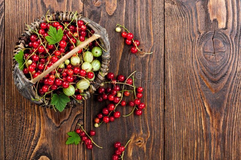 Röd vinbär, krusbär i korgen arkivbild