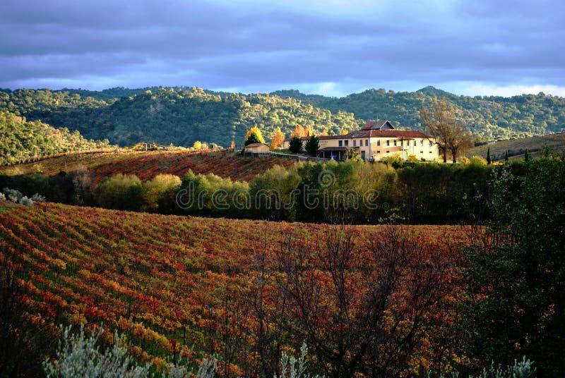 röd vingård arkivfoton